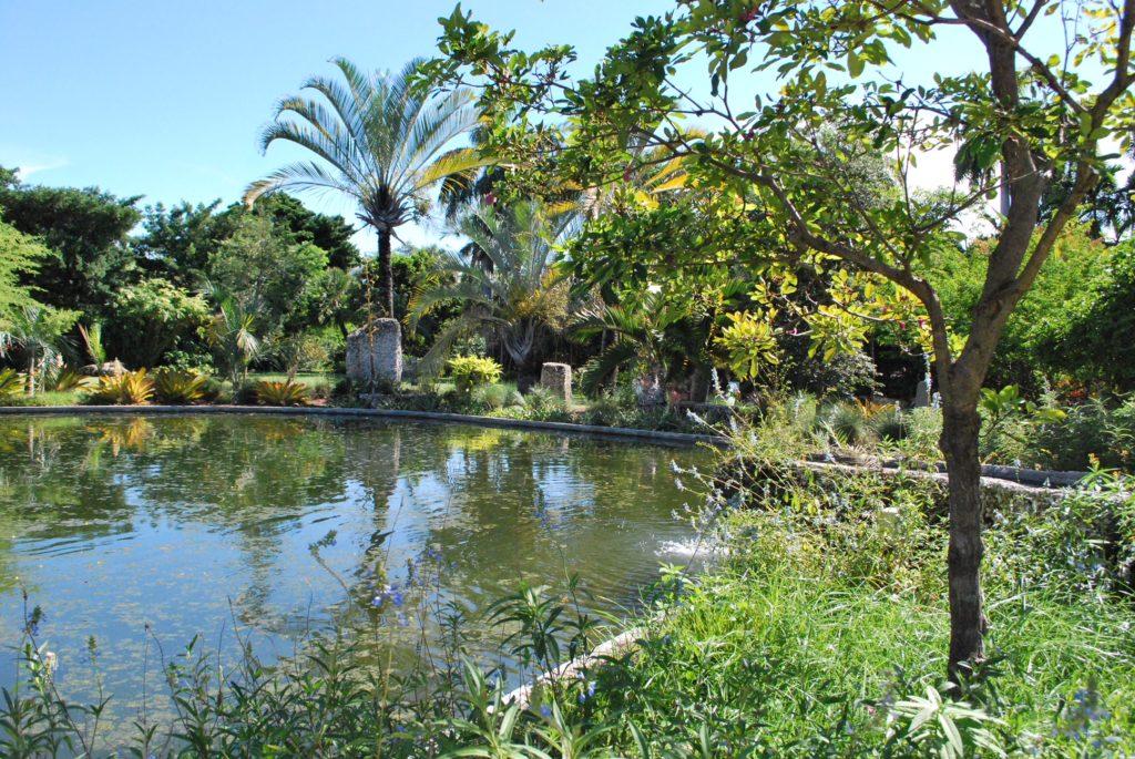 Big Fontain th palmes at the Miami Botanic Garden in summer