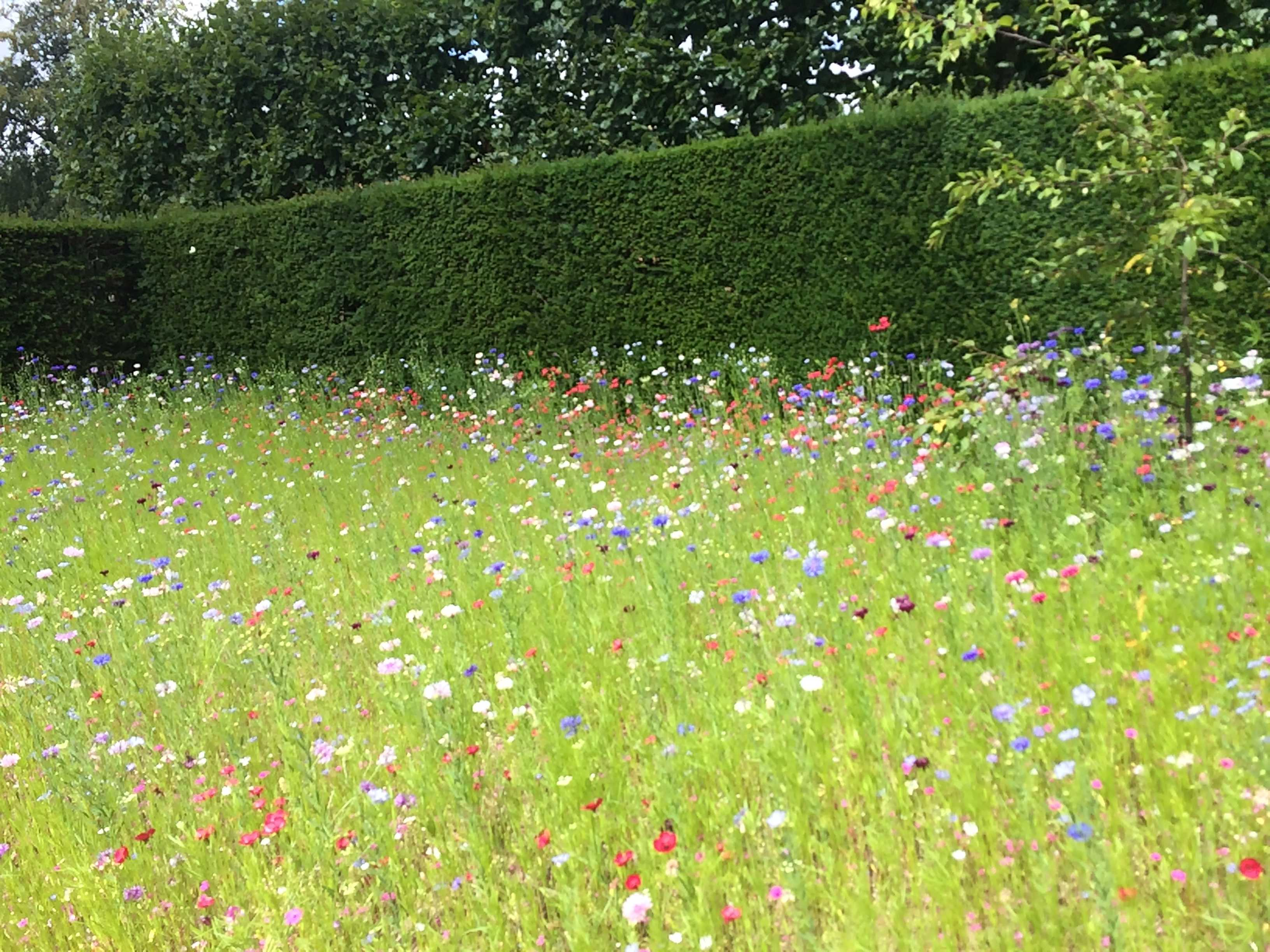 Flower field with mixed wild flowers at the entry to Sissinghurst Castle Garden in UK