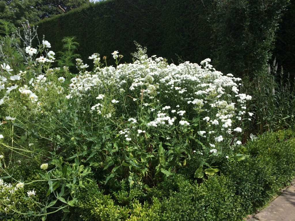 White Flower Bed with Boxwood in the White Garden of Vita Sackville-West